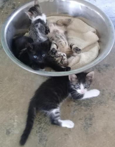Bowlful of Kittens