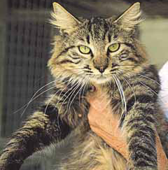 Pet of the week Kevin, april 2011