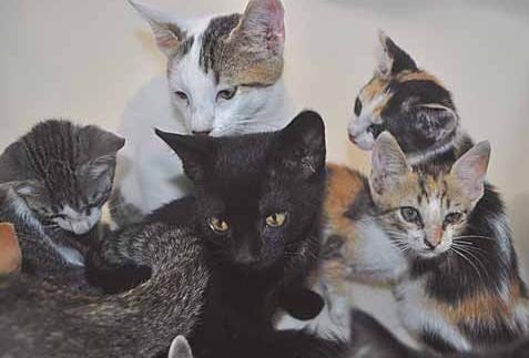 Supermarket of kittens