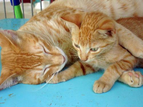 cats Animal Shelter Bonaire